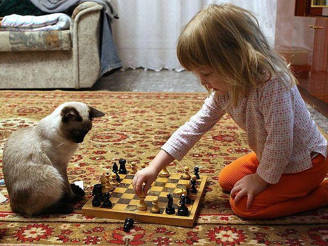 Турнир начинающих шахматистов